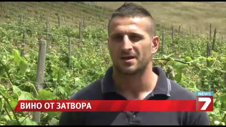 Пандизчии правят бяло вино