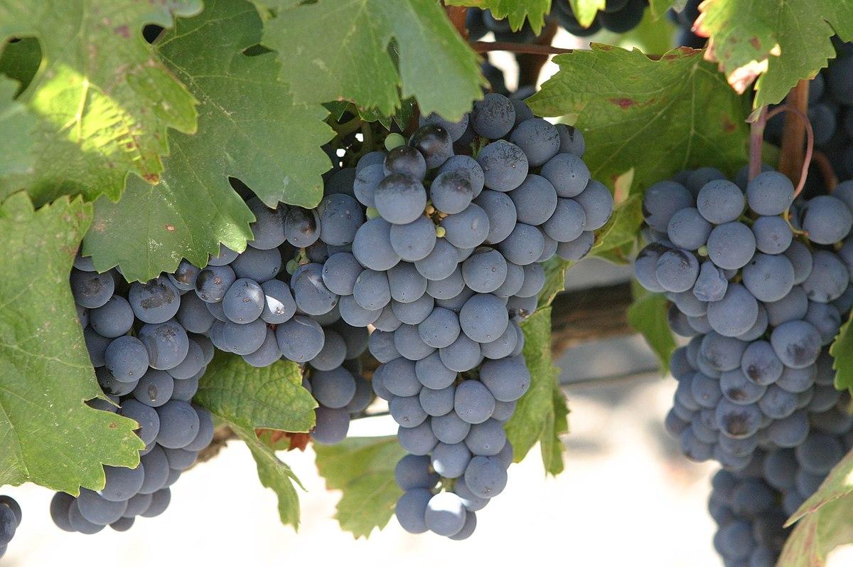 Вълшебното вино Малбек