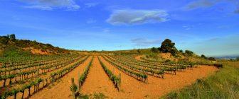 Дегустация на испански вина от по-слабо познати области