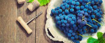 Грозде за вино или десертно грозде – каква е разликата?