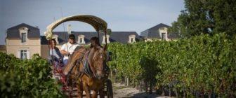 Най-добрите дестинации за винен туризъм в света за 2014