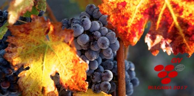 България ще бъде домакин на Световния конгрес по лозарство и винарство