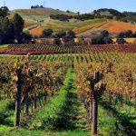 120 млн. литра вино се произвеждат всяка година в България