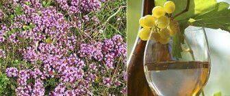 Как да се лекуваме с вино