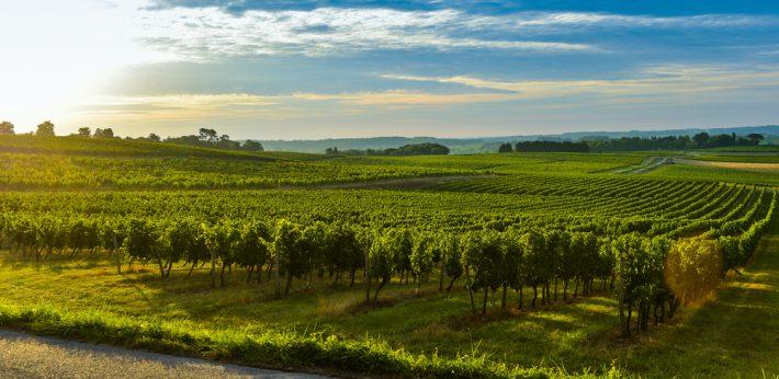 Всички френски вина съдържат пестициди
