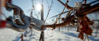 Ден на виното и любовта 14 февруари