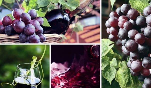 10 интригуващи предания и легенди за виното