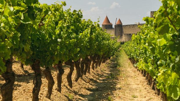 Красотата на френското вино