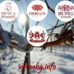 Винарските изби от региона на Мелник ви канят на Трифон Зарезан през 2019