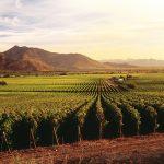 Пътищата на виното в Чили