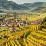 Виното на Австрия