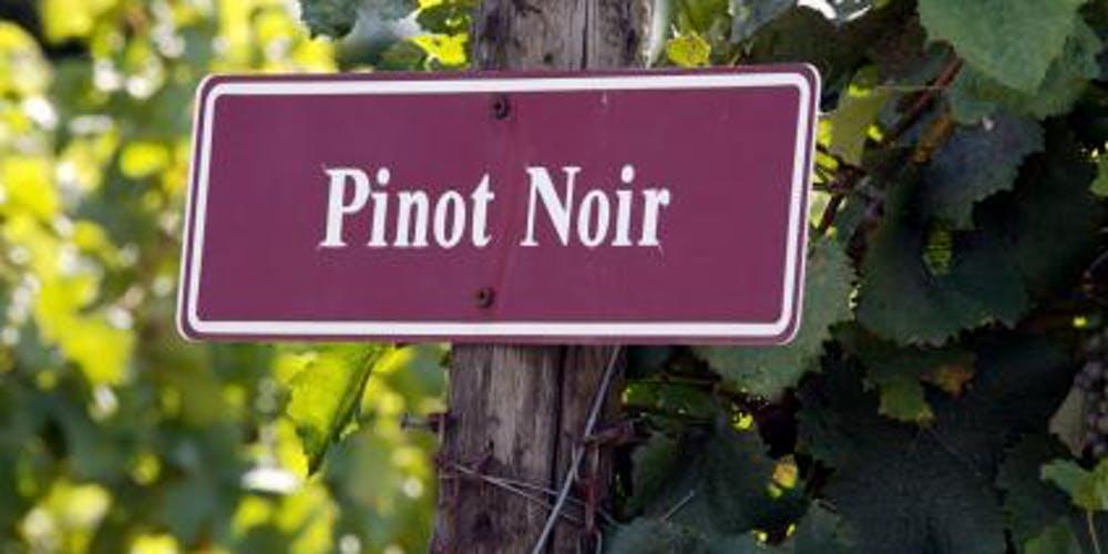 Днес отбелязваме Световния ден на Пино Ноар