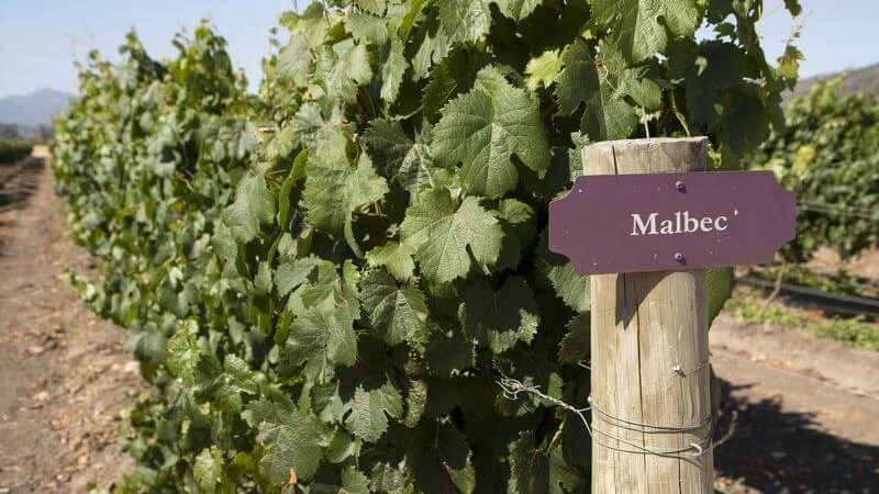 Как Малбек стана виното на Аржентина