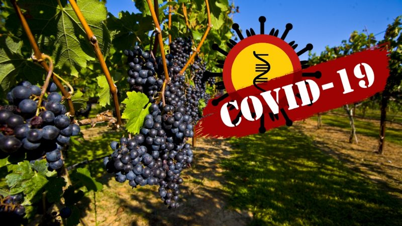 Как пандемията от Covid-19 ще повлияе на Българското Вино