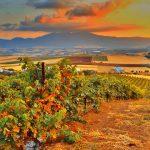 Къде е България в календара на международните дни на сортовете?