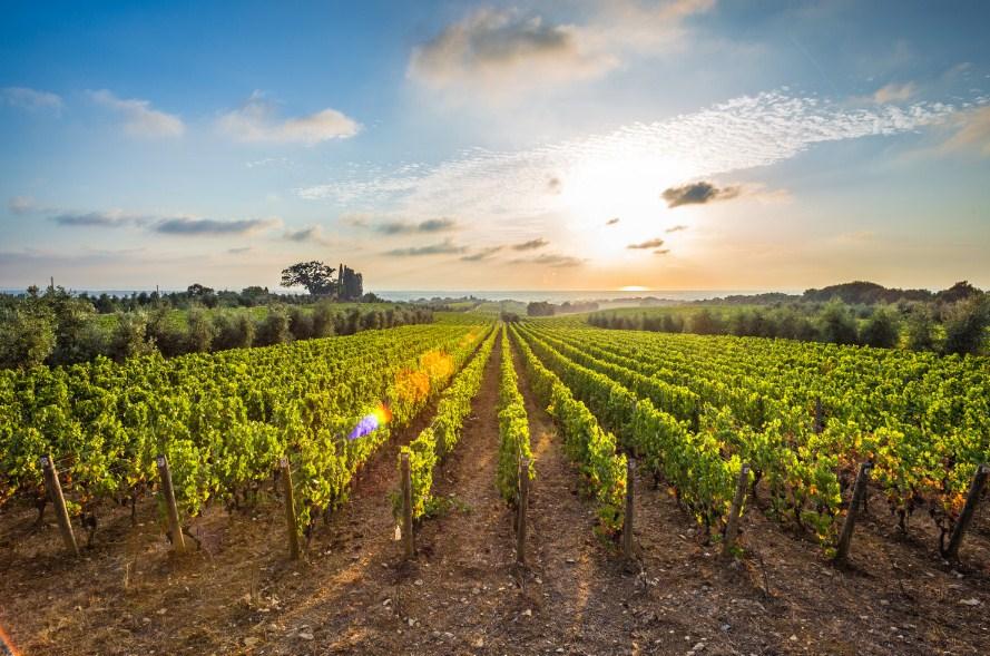 Прабългарският град Болгери - Родната следа в уникалното вино на Тоскана