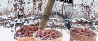 Ледено вино (ICEWINE, EISWEIN)